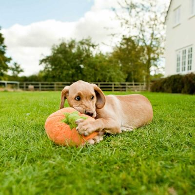 P.L.A.Y. Pumpkin Plush Dog Toy with sleepy Labrador