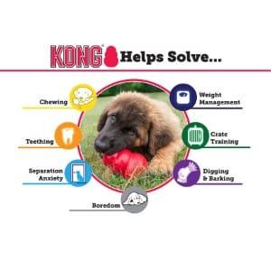 kong-classic-information