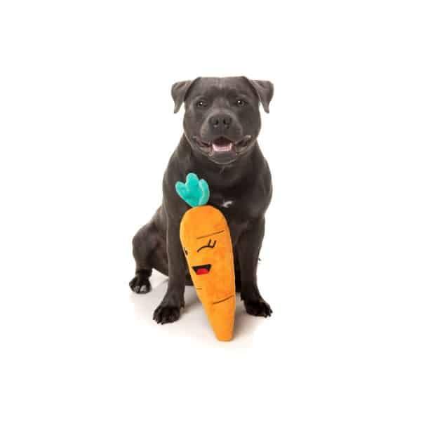 Fuzzyard Winky carrot with dog