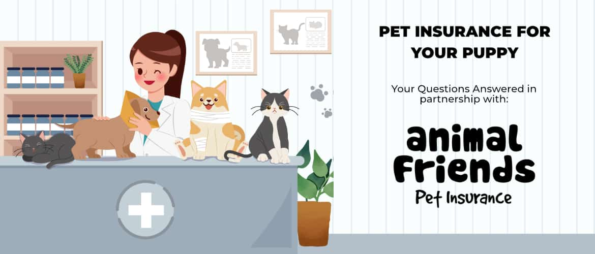 pet insurance for your puppy