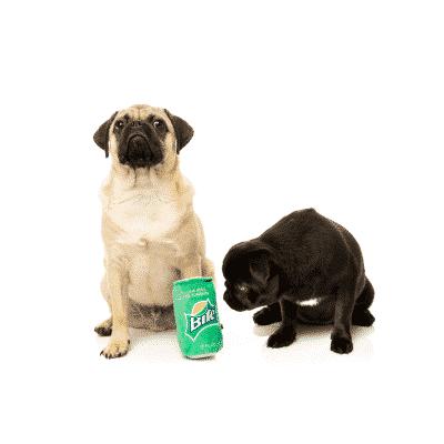 Fuzzyard Bite Dog Toy with Pug